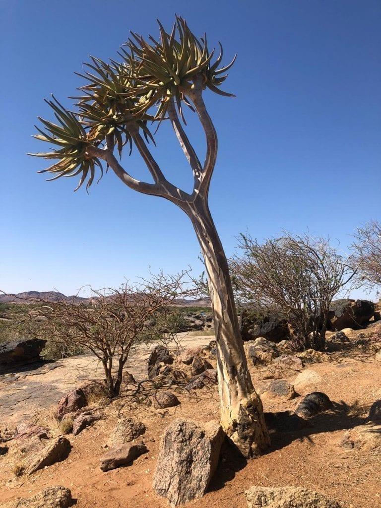 Authentic Bush Namibia